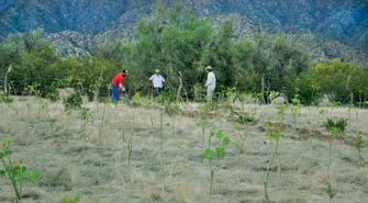 Un nuevo cultivo para generar biocombustible